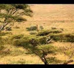 Wisata - Kenya Animal Safari Tour: Masai Mara Animal Safari Liburan Kenya-Tamasya di Kenya Masai Mara